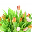Pink tulips isolated on white background — Zdjęcie stockowe