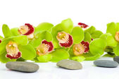 Beautiful green Orchid and spa set isolated on white background — Stock Photo