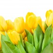 Yellow tulips — Stock Photo #25229685