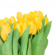 Yellow tulips — Stock Photo #25230493