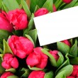 Greeting card with pink roses isolated on white background — Stock Photo