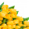 Yellow tulips — Stock Photo #25230521