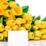 Yellow tulips — Stock Photo #25230523