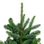 Pine branches — Stock Photo