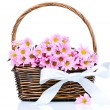 Chrysanthemum flowers in the wicker — Foto de Stock