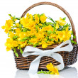 Yellow freesia flowers in the wicker — Stock Photo