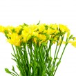 Yellow freesia — Stock Photo