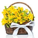 Yellow freesia flowers in the wicker — Stock Photo #26726619