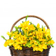 Yellow freesia flowers in the wicker — Stock Photo #26726625