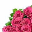 Pink roses — Stock Photo #26726727