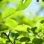 folhas verdes com dof raso de raio de sol — Foto Stock