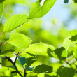 hojas verdes con sun ray superficial dof — Foto de Stock