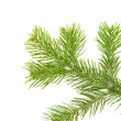 Pine branches isolated on white — Stock Photo