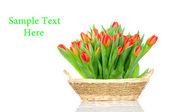Tulpen in den korb, die isoliert auf weißem hintergrund — Stockfoto