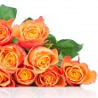 Stock Photo: Orange roses on white background