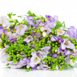 Stock Photo: Lilac freesiisolated on white