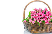 Pink tulips in the wicker isolated on white background — Stok fotoğraf