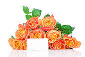Orange roses on white background — Stok fotoğraf