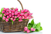Pink tulips in the wicker isolated on white background — Zdjęcie stockowe