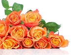 Orange roses on white background — Stockfoto