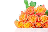 Orange roses on white background — 图库照片