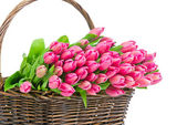 Pink tulips in the wicker isolated on white background — Stock fotografie