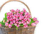 Pink tulips in the wicker isolated on white background — Stockfoto