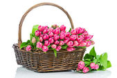 Pink tulips in the wicker isolated on white background — Photo
