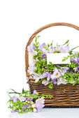 Lilac freesia in the wicker isolated on white — Stock Photo