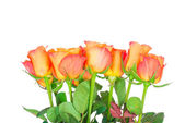 Orange roses on white background — Photo