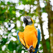 Colorful blue parrot sits on stick — Stock Photo #38383567