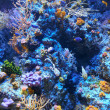 Corals reef — Stock Photo #38383643