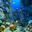 Corals reef — Stock Photo #38383717
