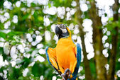 Colorful blue parrot sits on the stick — Stock Photo