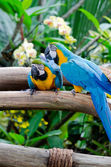 Colorful macaws sitting on the branch — Stock Photo