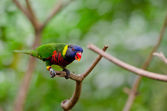 Colorful macaw sitting on the branch — Stock Photo