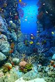 Corals reef — Stock Photo