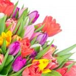 Tulips on white background — Stock Photo #39367755