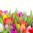 Stock Photo: Tulips on white background