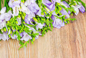Bunch of freesia flowers — Stock Photo