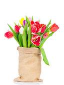 Tulips in the sack — Stock Photo
