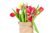 Tulips in the sack on white background — Zdjęcie stockowe