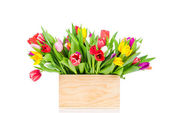 Tulips in the box on white background — Stock Photo