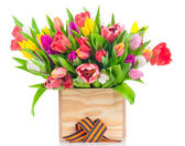 Tulips in the wooden box with george ribbon on white background — Stok fotoğraf