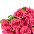 Fresh red roses on white background — Stock Photo