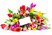 Tulips with white blank card — Stock Photo
