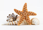 Seashells and a starfish. — Foto de Stock