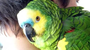 Blue-fronted amazon parrot — Stock Video #23241110