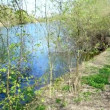 Stock Video: Wilderness with idyllic lake in spring