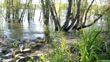 Flooded banks of the Rhine — Stock Video